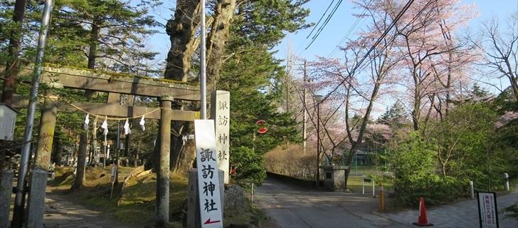 諏訪神社の鳥居から諏訪の森公園の桜を望む