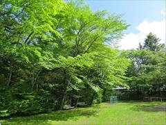 諏訪の森公園