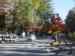軽井沢 道路沿いの紅葉