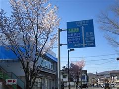 軽井沢駅北口 桜