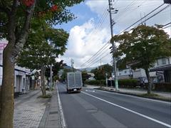 軽井沢本通りの街路樹