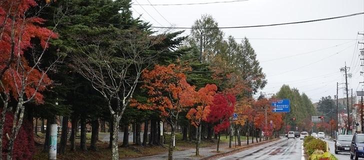 軽井沢 軽井沢 国道18号街路樹 紅葉 2017年10月29日雨