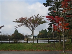 矢ケ崎公園 紅葉