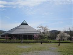 大賀ホール裏庭 枝垂れ桜