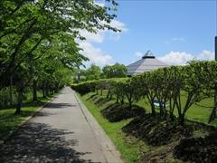 大賀ホール横の桜並木