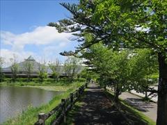 矢ヶ崎公園 遊歩道 若葉 新緑 軽井沢