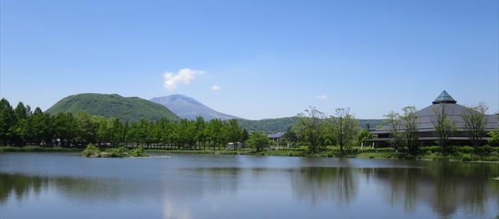矢ヶ崎公園が新緑に包まれています