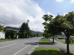 大賀通り並木