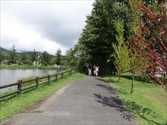 公園の遊歩道カツラ並木