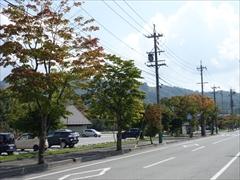 軽井沢 矢ヶ崎公園・大賀ホール 大賀通り モミジ並木