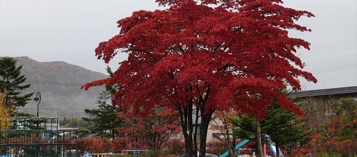 軽井沢 矢ヶ崎公園 紅葉