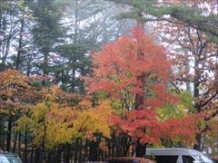 軽井沢 ホテルブレストンコート 紅葉