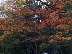 ホテル鹿島ノ森 紅葉 軽井沢
