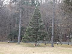 お庭 クリスマスツリー 昼