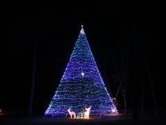 お庭 クリスマスツリー 夜