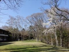 ホテル鹿島ノ森 中庭 コブシ