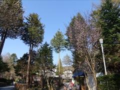 万平ホテル 山桜