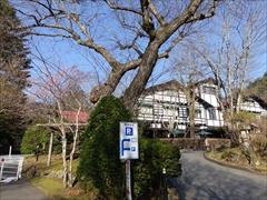 万平ホテル 枝垂れ桜