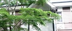 軽井沢 ホテル音羽ノ森 カエデ 新緑