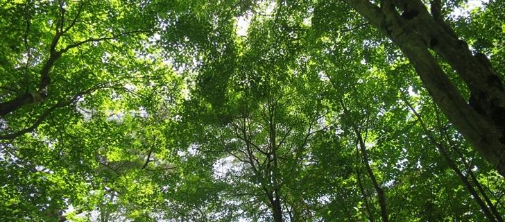 軽井沢高原教会が真夏の深い緑の木々に包まれています