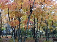 軽井沢 軽井沢高原教会の庭