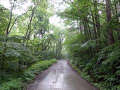 小瀬林道を直進