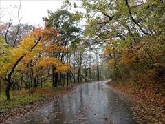 軽井沢 赤岩橋〜野鳥の森方面