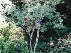 軽井沢 小鳥の巣箱