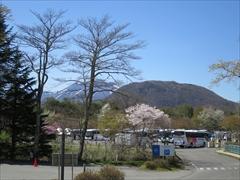 プリンスホテルから浅間山・桜