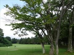 コテージ内ゴルフ芝
