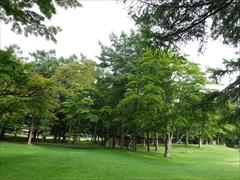コテージと木々