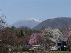 軽井沢 プリンスホテルウエスト 桜と浅間山・離山