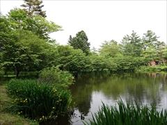池の周りの桜を右側から