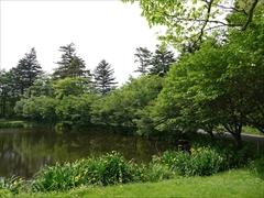 池の周りの桜を左側から