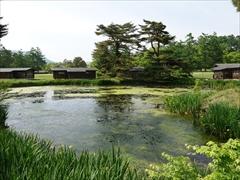 コテージ(池)と新緑