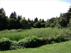 軽井沢 プリンスホテルウエスト コテージ付近の池
