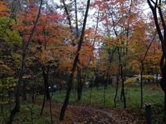村民食堂の前の紅葉
