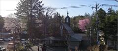軽井沢 聖パウロカトリック教会 桜