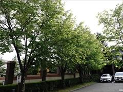 軽井沢 ハーヴェストクラブ正面の庭