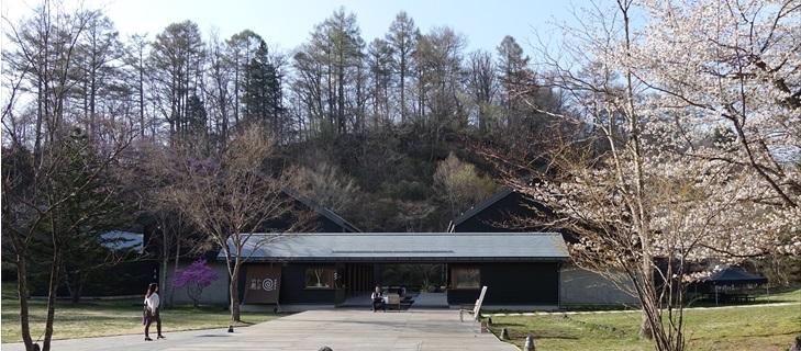 軽井沢 トンボの湯の正面のヤマザクラが満開です 2018年4月22日