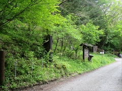 野鳥の森 若葉 新緑 星野エリア 軽井沢