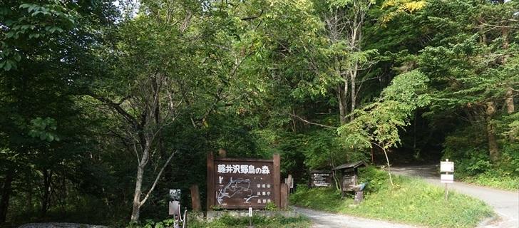 軽井沢の野鳥の森が秋の気配に包まれています