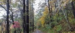 軽井沢 野鳥の森 紅葉