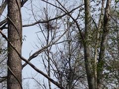 軽井沢 野鳥の森 熊が集めた小枝の熊だな