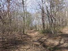 軽井沢 野鳥の森