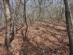 軽井沢 野鳥の森 広葉樹落葉