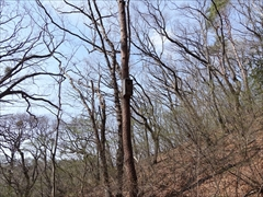 軽井沢 野鳥の森 ムササビ巣箱