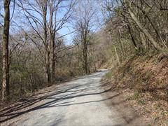 軽井沢 野鳥の森 小瀬林道