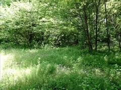 軽井沢 湯川ふるさと公園 自然観察路から