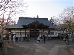 神宮寺本殿 桜満開